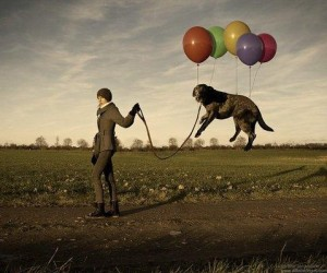 walk dog balloon
